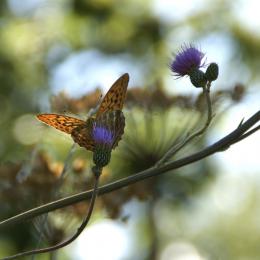 Farfalla su fiore