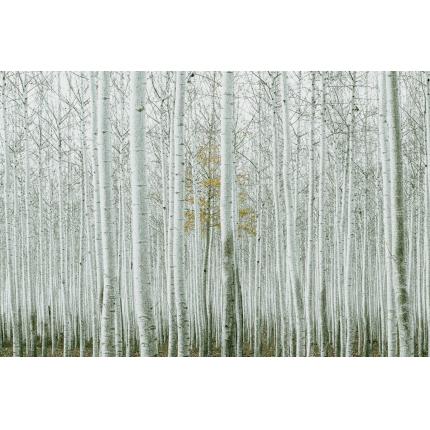 Carta da parati moderna foglie verdi livingdeco 39 for Carta parati natura