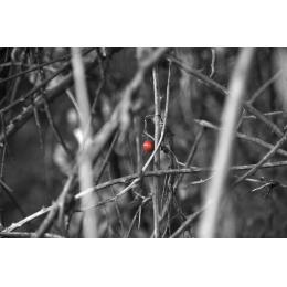 Frutto rosso