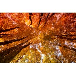 Soffitto d'autunno
