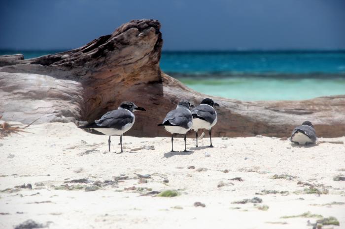 Gabbianelle sulla spiaggia