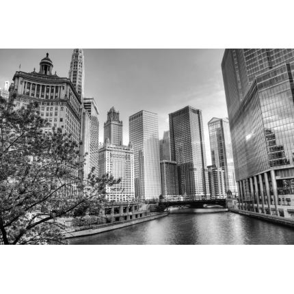 Fotomurali Città e Skylines -  Chicago
