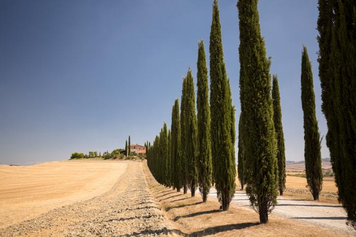 Il viale dei cipressi