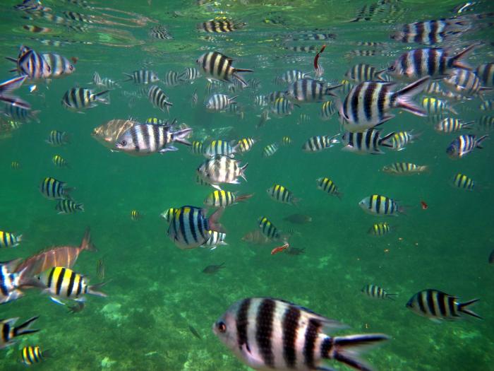 Pesci Caraibici