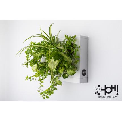 Giardini verticali - Pannello singolo per giardino verticale HOH!