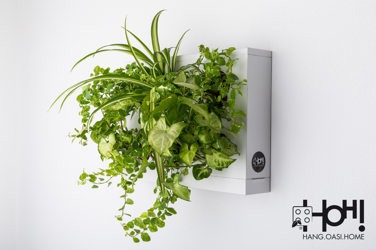 Pannelli per giardini verticali hoh singolo livingdeco 39 - Moduli per giardino verticale ...