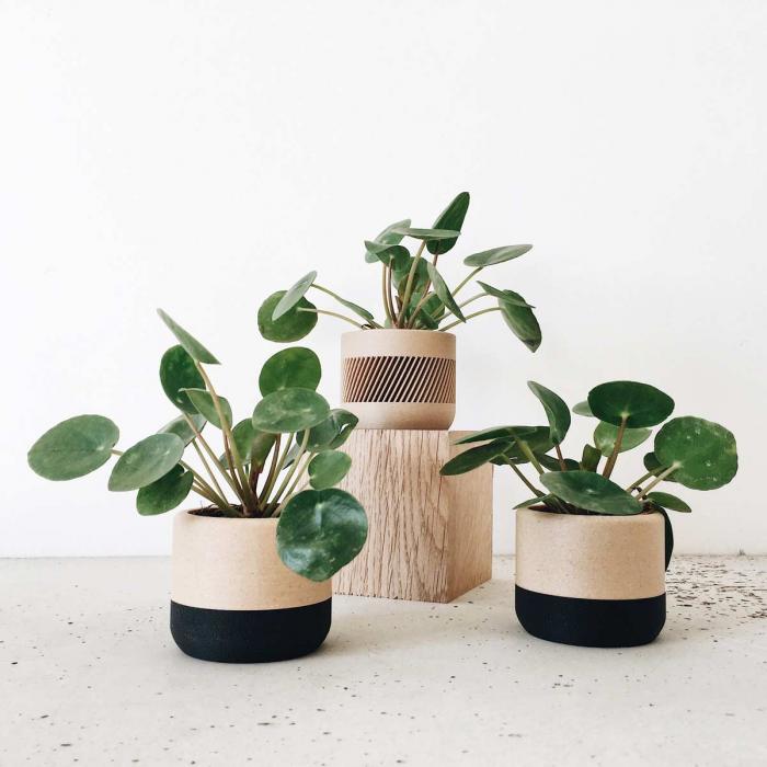 Ecotool - Portavaso bicolore nero legno naturale