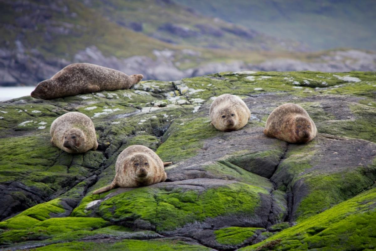 Stampa su tela natura animali foche livingdeco 39 for Carta parati natura