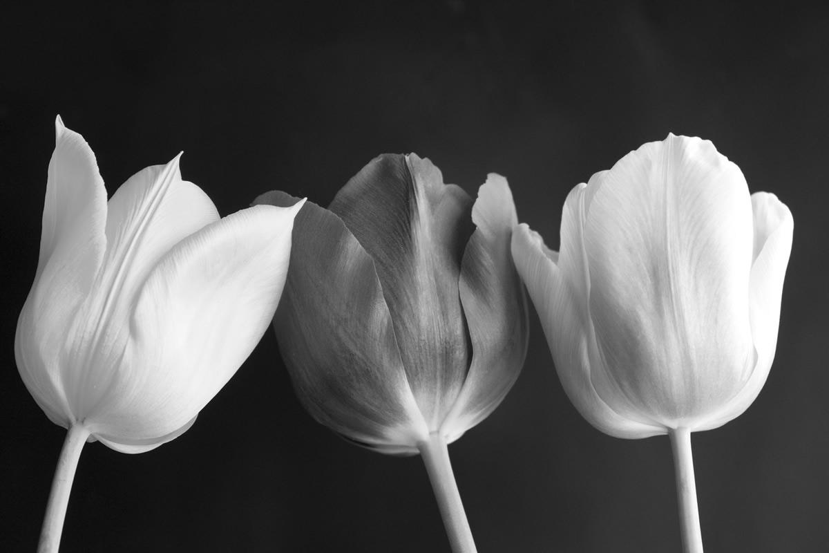 Lampada Fiore Tulipano : Stampa su tela tulipani in bianco e nero livingdeco