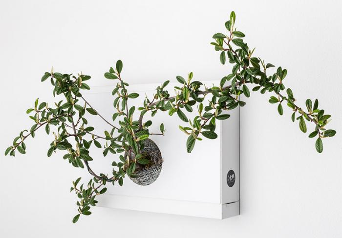 Pannello per bonsai  B-HOH!-nsai Artkami