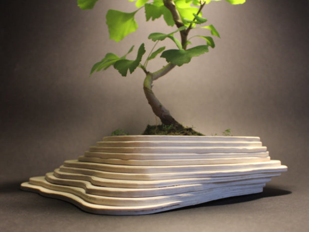 Vasi decorativi vasi in legno porta bonsai livingdeco 39 for Vasi per bonsai grandi