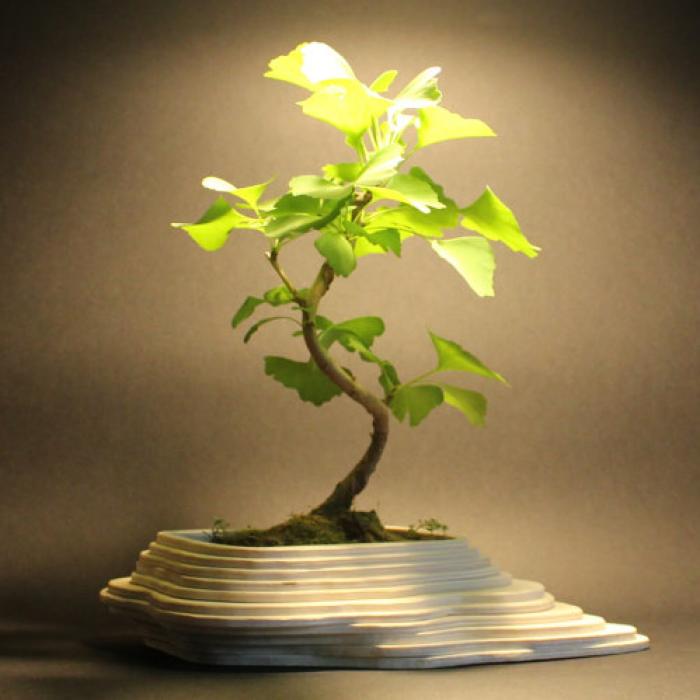 Vaso in legno bonsai