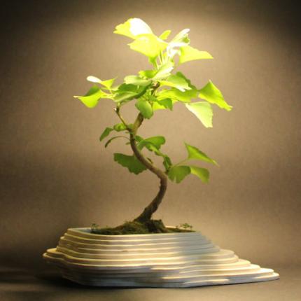 Vasi decorativi - Vaso in legno bonsai