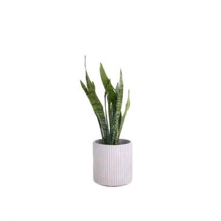 Mon vaso tondo in cemento piccolo