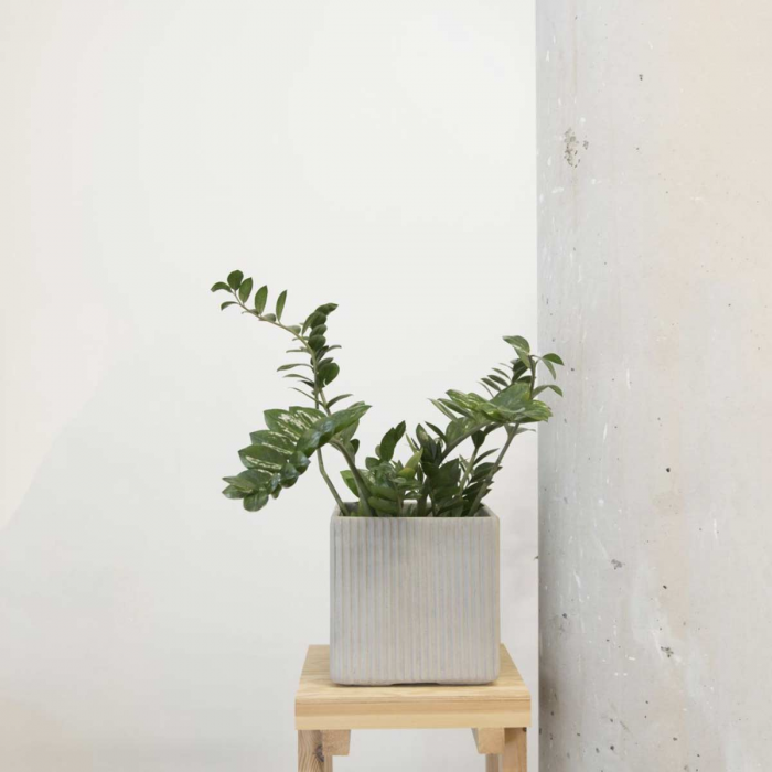 Mon vaso quadrato in cemento - small