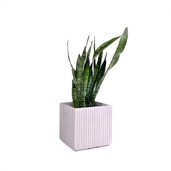 Mon vaso quadrato in cemento - medium