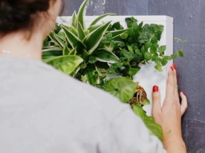 5 idee per arredare con le piante