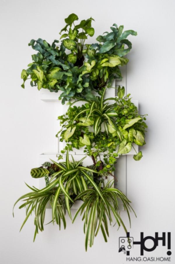 giardini-verticali-trio