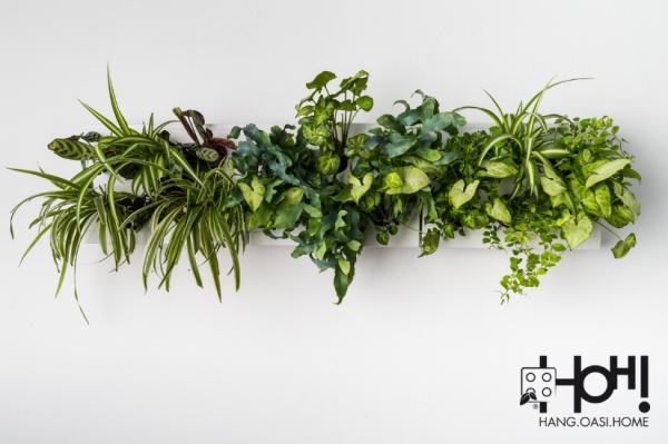giardini-verticali-triosmart